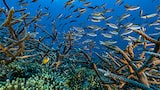 Alexis Rosenfel sony alpha 7r2 shoal of fishes swimming among the corals