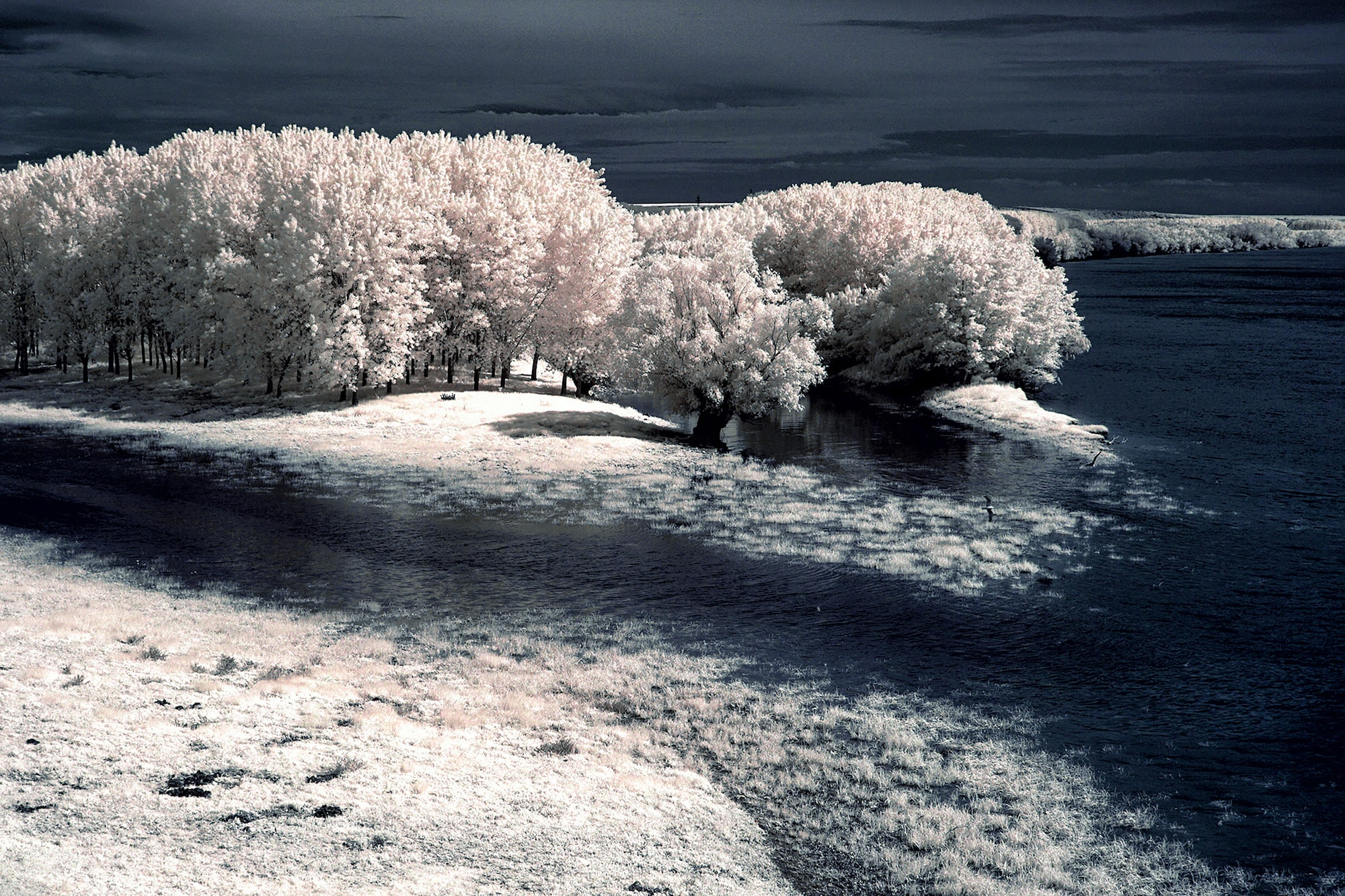 alin popescu sony alpha 6000 infrared shot of trees by a lake