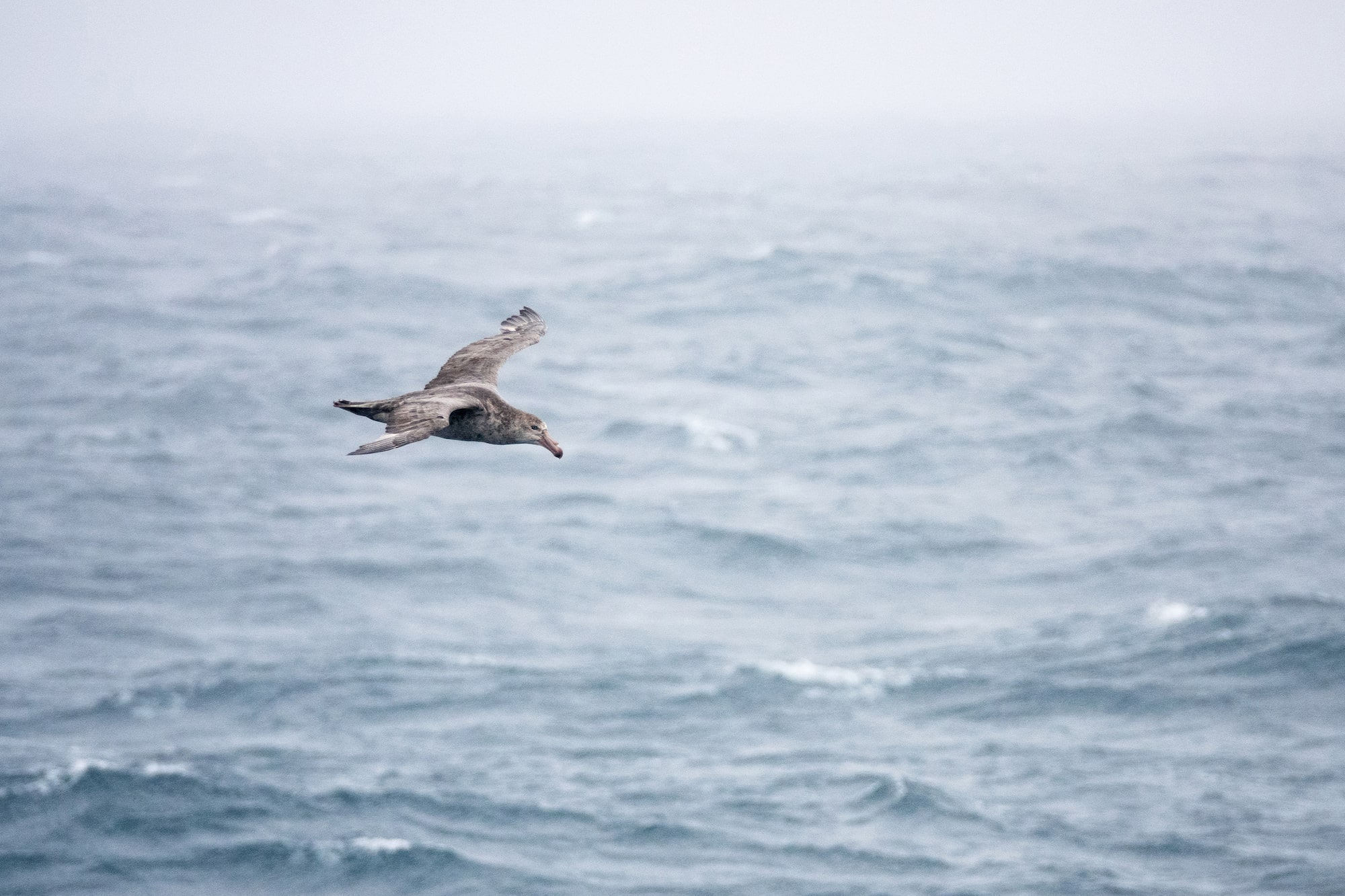 will burrard lucas sony alpha rx10IV a lone bird soars above the ocean