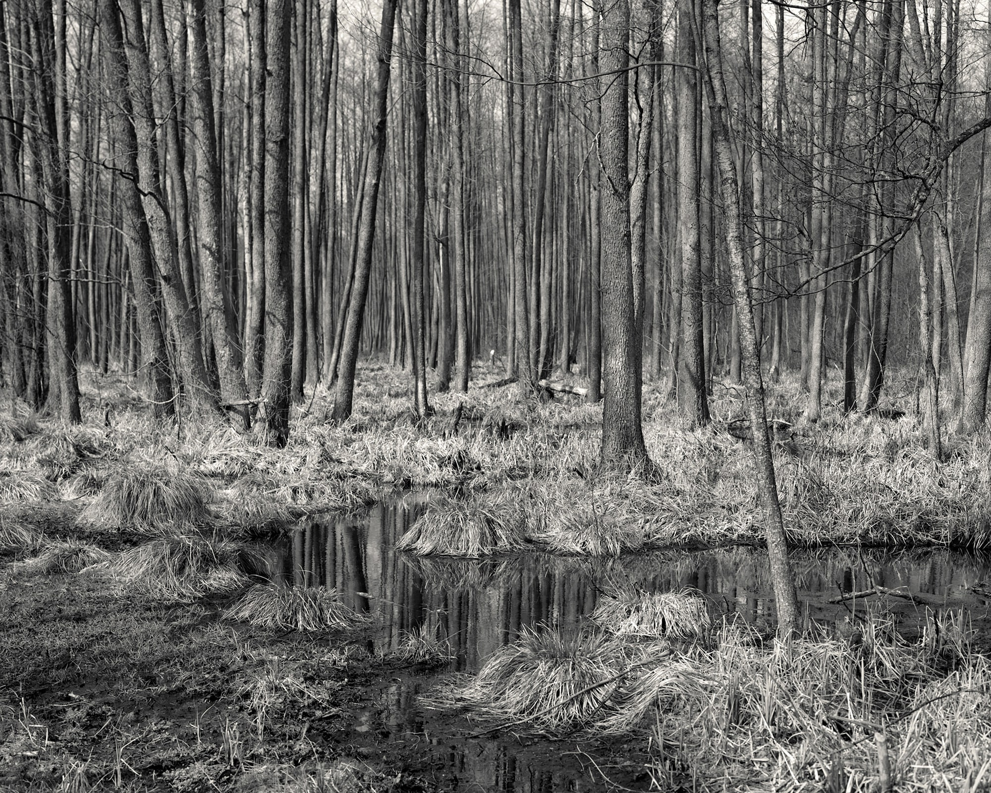 alys tomlinson forest trees reflected in a stream