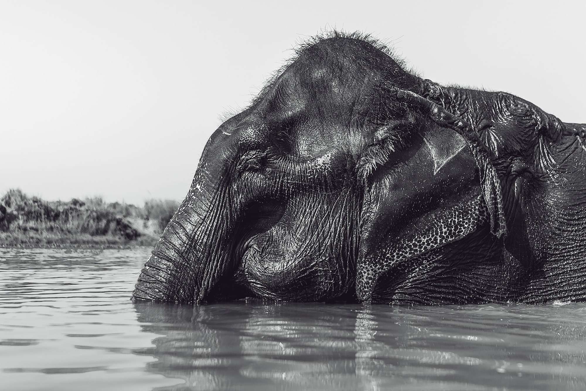 tolis fragoudis sony alpha 7SII sideway on shot of an elephant relaxing in the water
