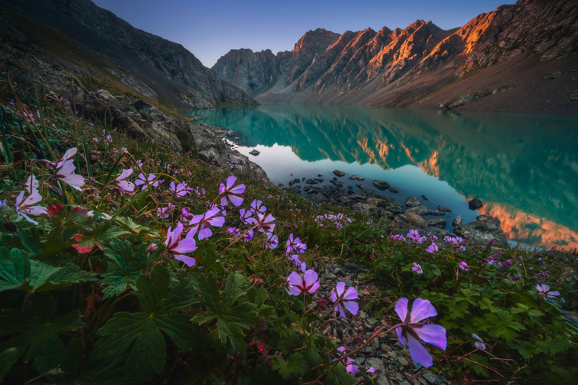 albert dros sony alpha 7RIII distant mountains reflected in a still lake with purple flowers in the foreground
