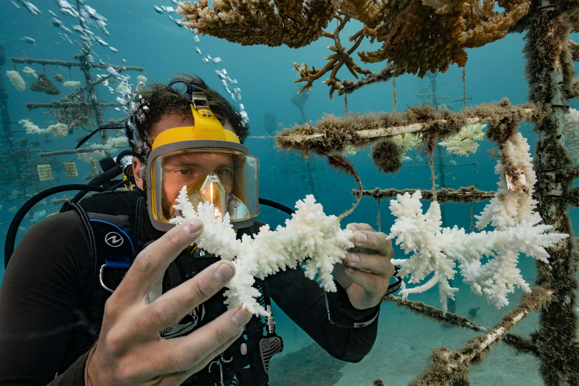 alexis-rosenfeld-sony-A7RM2-diver-inspects-a-piece-of-white-coral-underwater.jpg