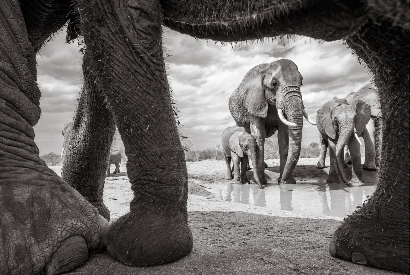 will burrard lucas sony alpha 6500 black and white view from under the elephant