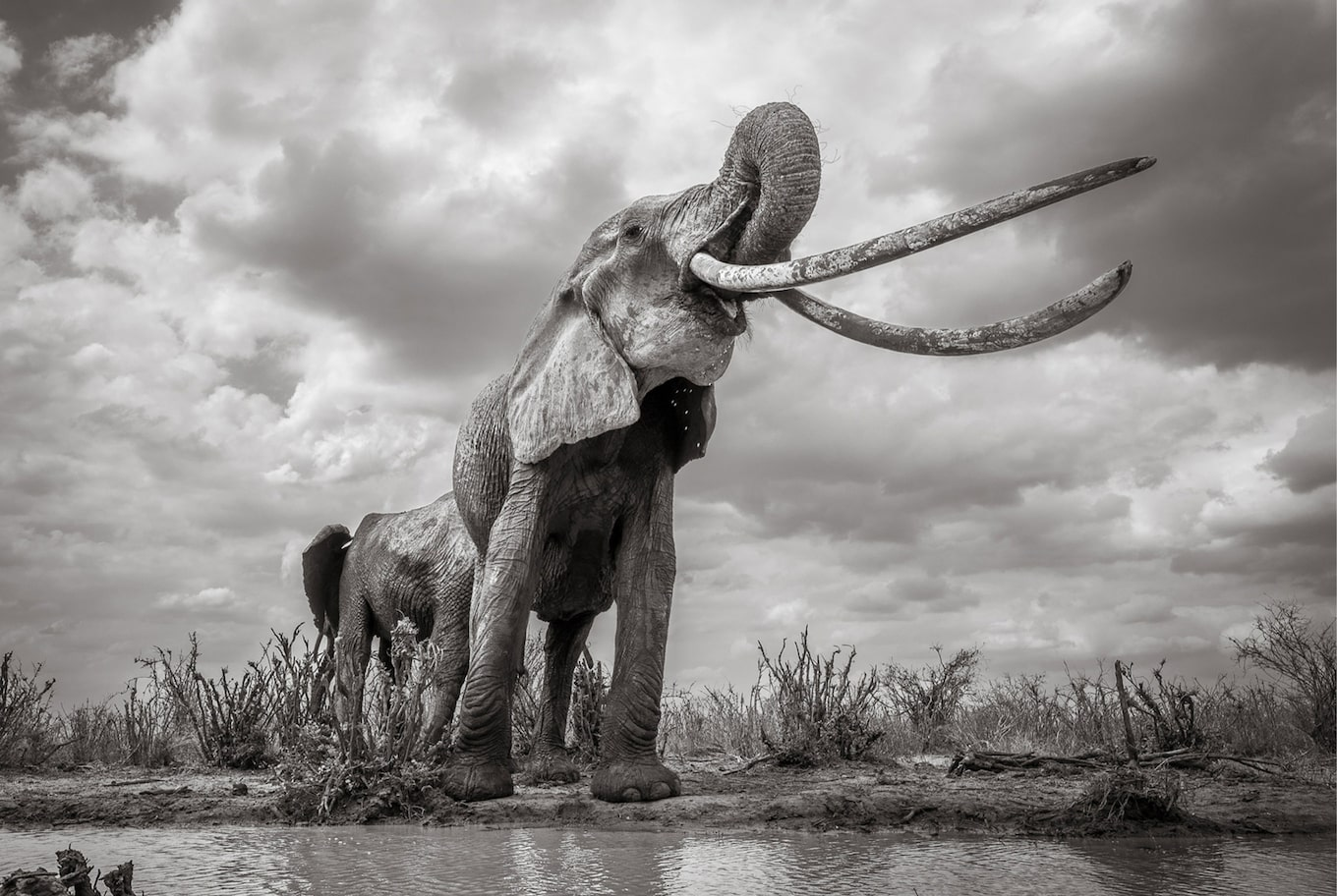 will burrard lucas sony alpha 6500 black and white elephant view from below