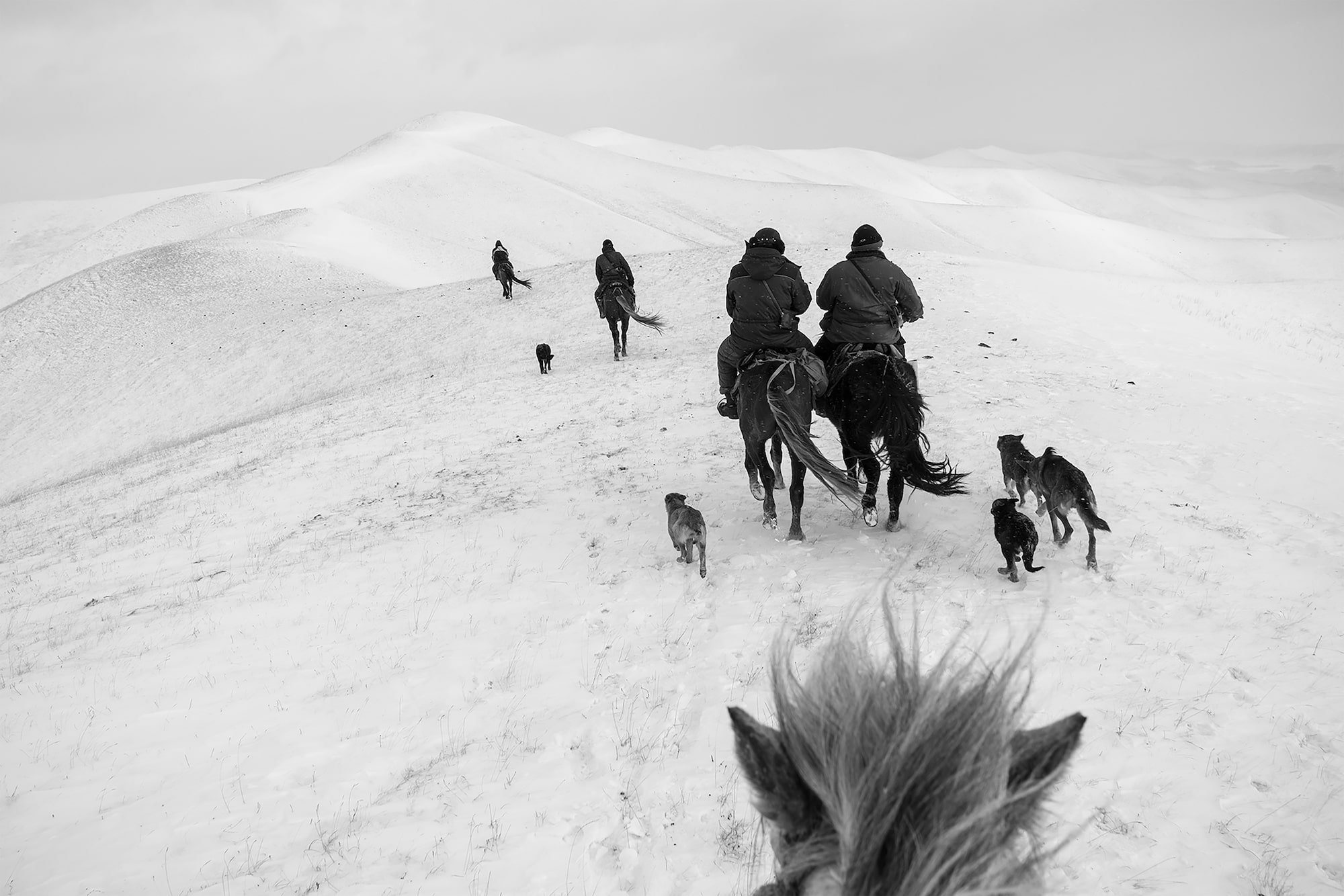 frederik buyckx sony alpha 7RM3 horseback rider follows a group of riders with their dogs across the snow