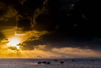 pall stefansson sony alpha 7RII horses grazing in icelandic landscape