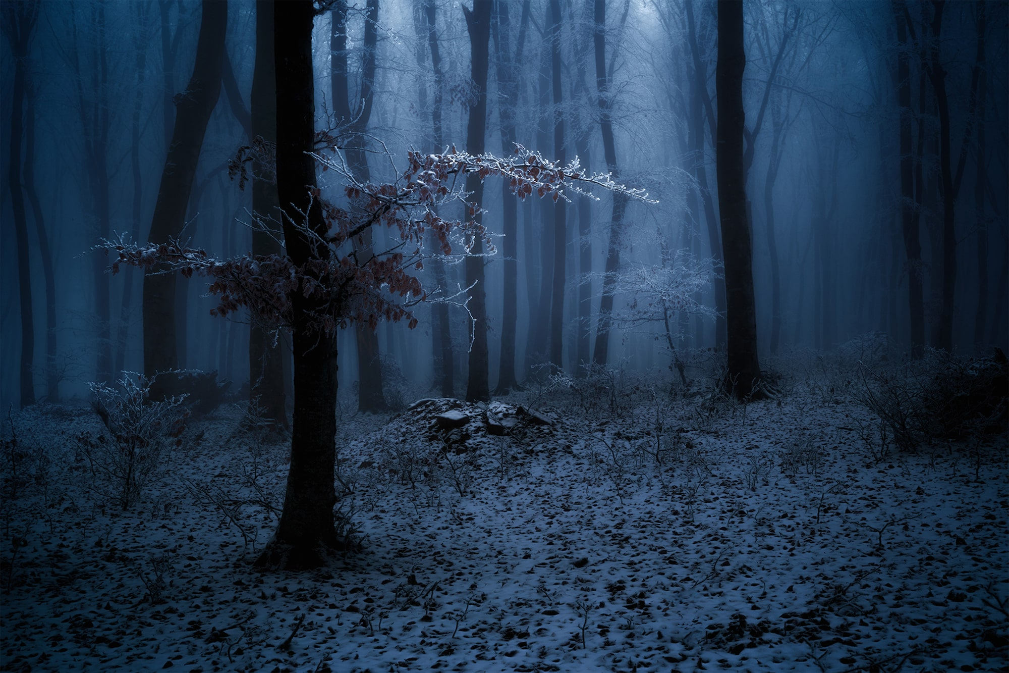 ciprian negura sony alpha 7M3 a frosty branch in a misty dark forest