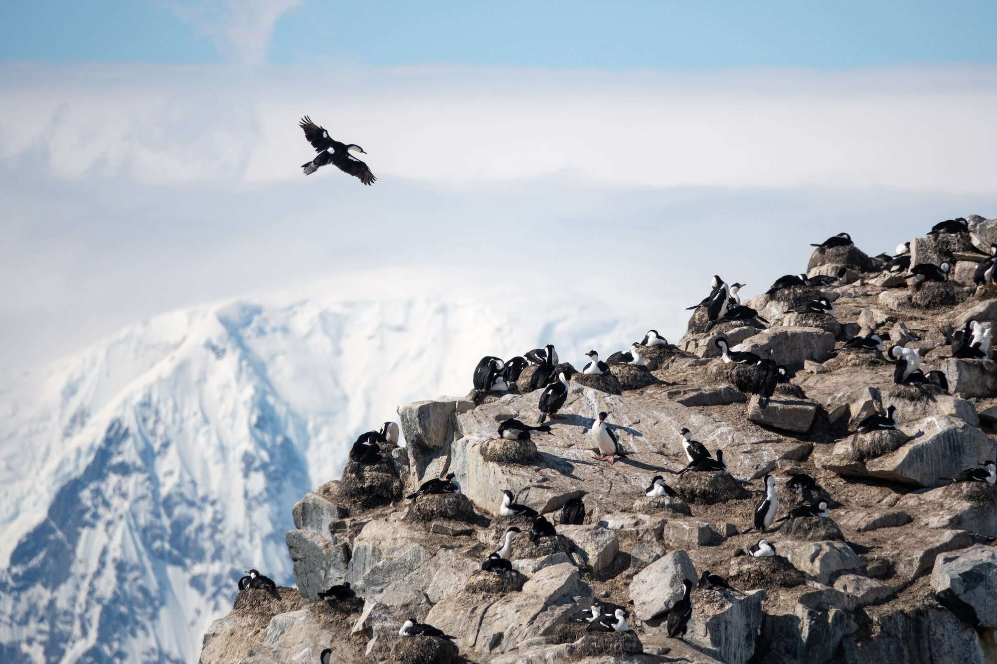 will burrard lucas sony alpha rx10IV a bird soars above a mountain ledge with snow covered caps behind