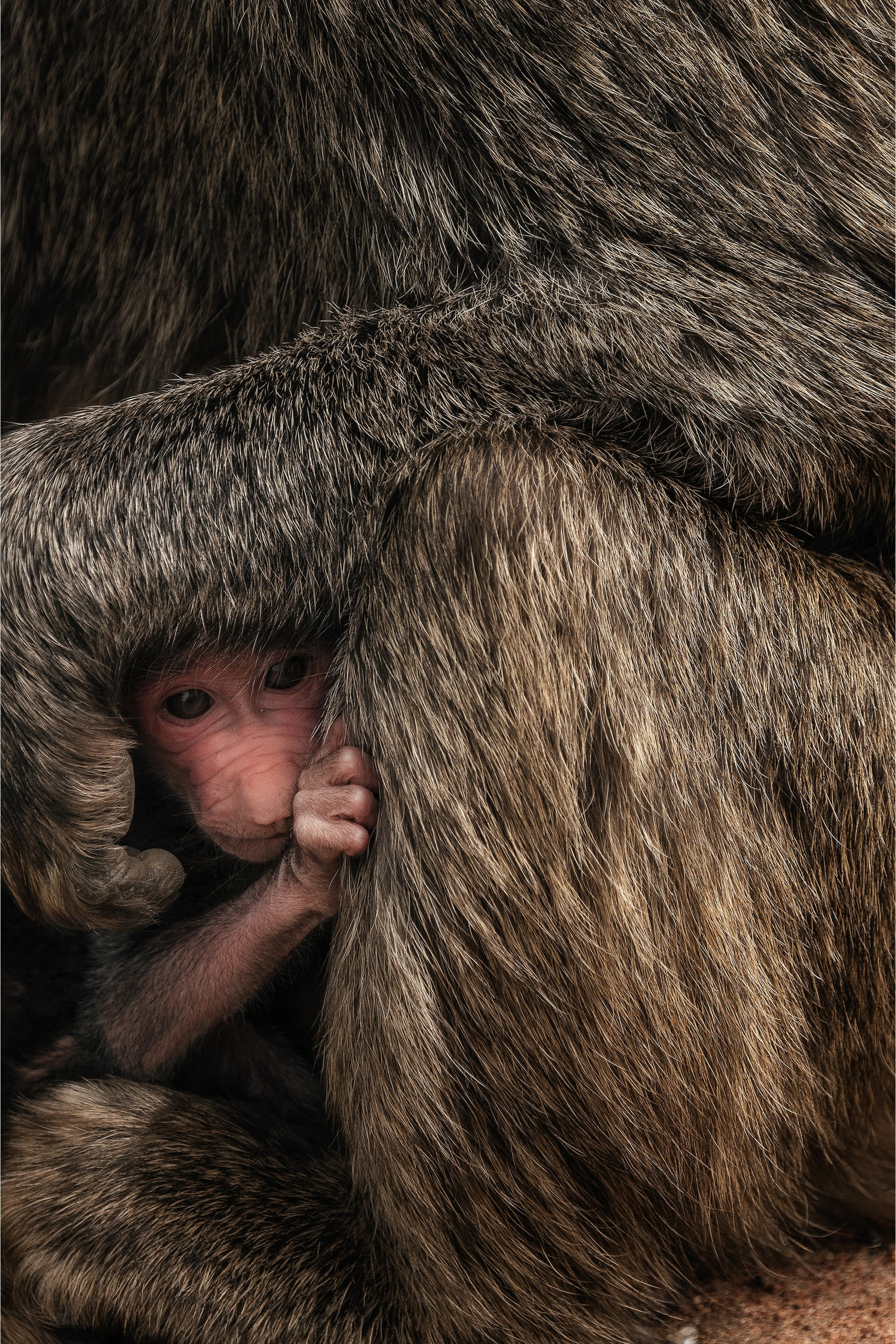 chris schmid sony alpha 7RIII newborn baby hides next to mother tanzania