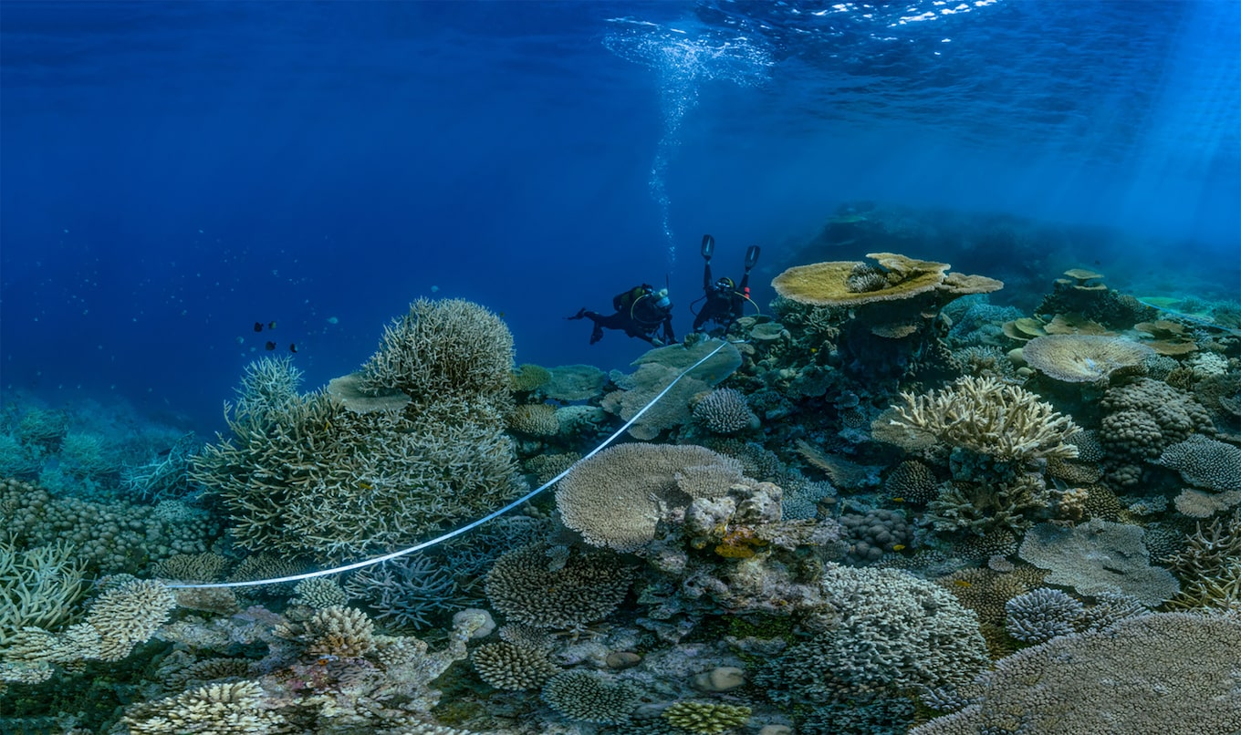 Alexis Rosenfeld sony alpha 7r2 two divers exploring the seabed