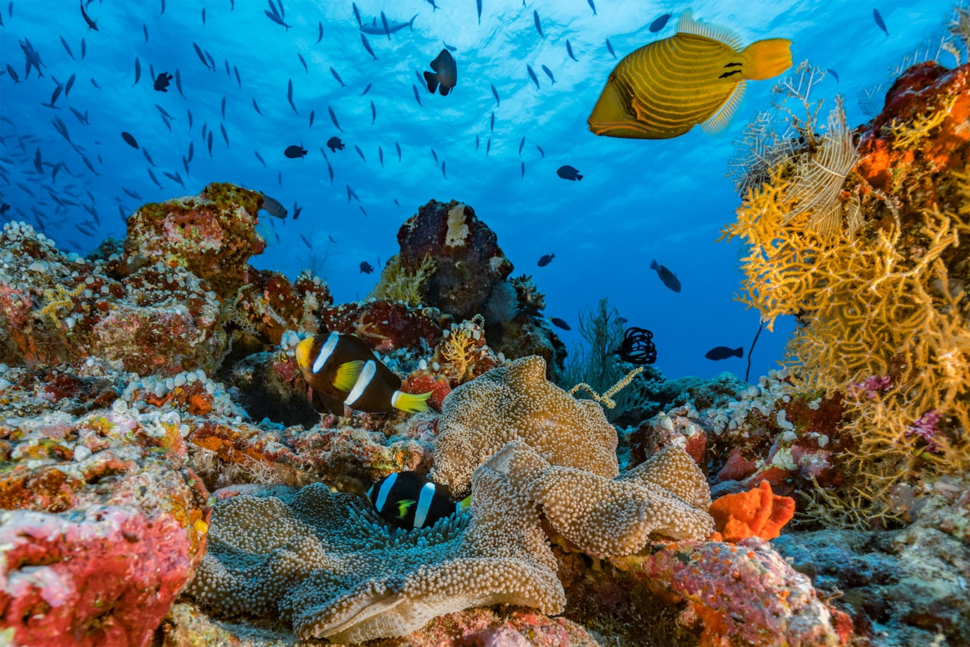 alexis rosenfeld sony alpha 7r2-vivid view of the sea bed and corals