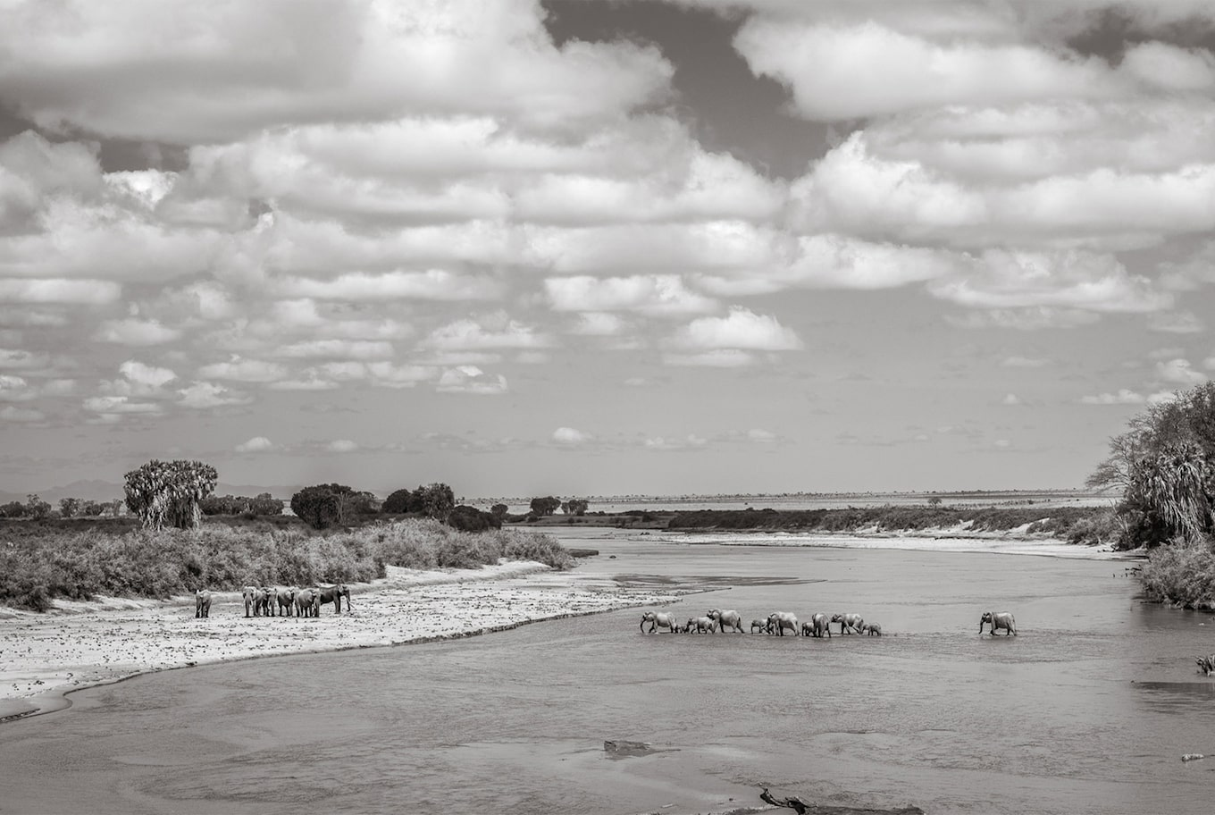 will burrard lucas sony alpha 9 black and white elephants crossing a river